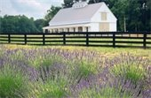 Sweethaven Lavender of Williamsburg