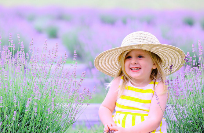 Sweethaven Lavender Farm